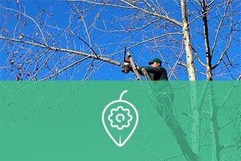 Grimpeur élagueur Arboriste